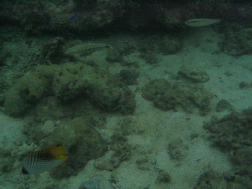 熱帯魚たち