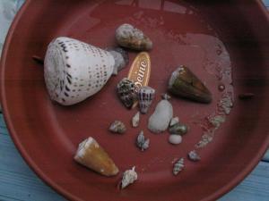 拾った貝殻