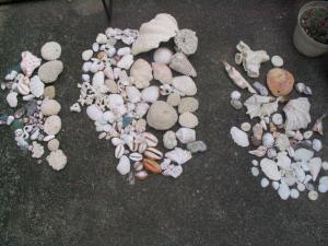 海から頂いた貝殻たち