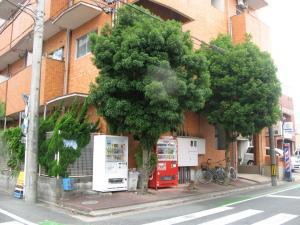 木がもりもりマンション