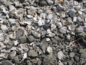 貝殻いぱ~い
