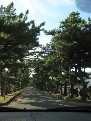 舞阪 松並木