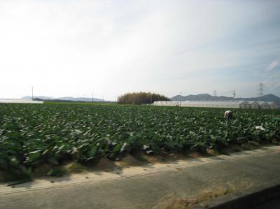 収穫だーーー!!!