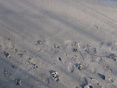 エドの足跡