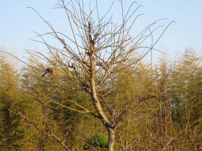 木に鳥さん