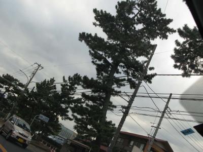 二宮町 松並木