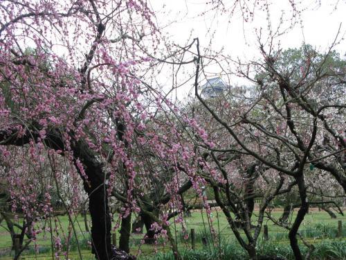 梅と岡山城