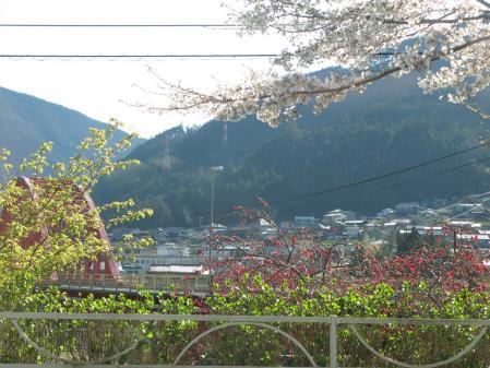 桜と橋と・・・