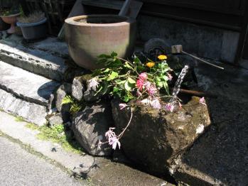 お手水に花