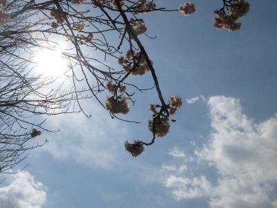 桜と蜂とお天道様と・・
