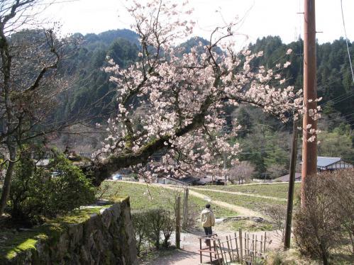 里桜のゲート