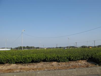 茶畑と扇風機