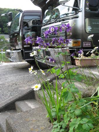 花とトラック