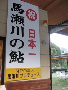 日本一 馬瀬川の鮎