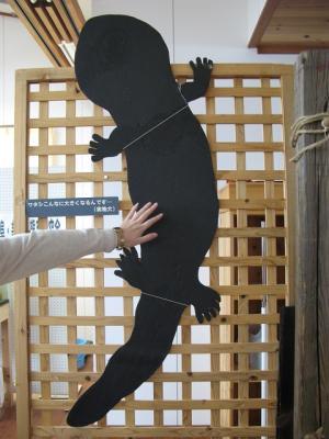 オオサンショウウオ(大山椒魚)