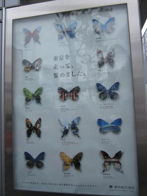 東京ちょうちょ