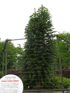 ジェラシックツリー