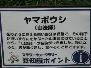 ヤマボウシ