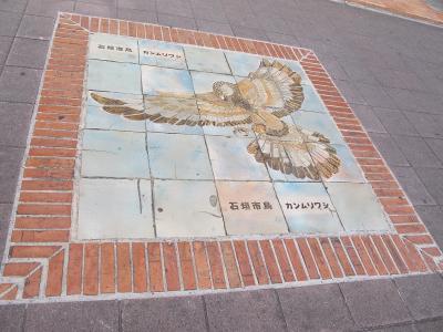 石垣市の鳥カンムリワシ