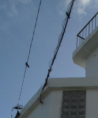 観音崎灯台に留まる小鳥