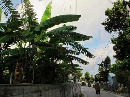 バナナの木