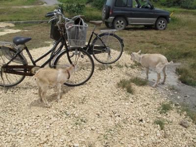 自転車気になるう~~