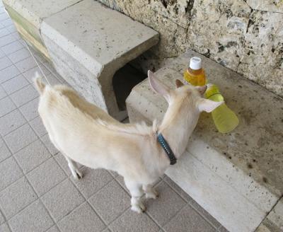 飲み物どーん!