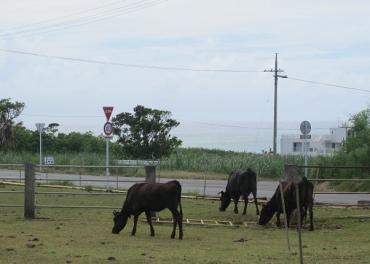 TAKASIさんの牛