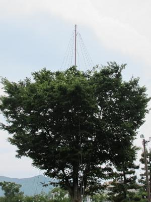 ハンギングツリー