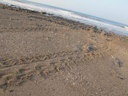 海亀の歩いた跡