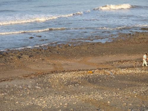 アカウミガメの上陸跡