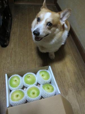 梨だあ!!!