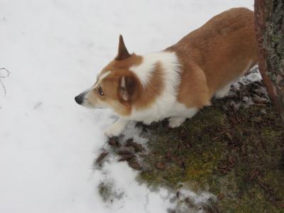 雪とエドちゃん2008冬