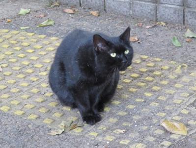 日比谷公園の黒猫