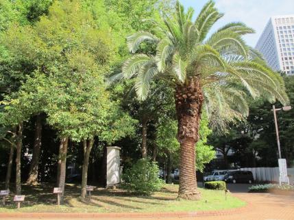 日比谷公園 郷土の森