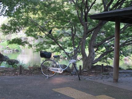 心字池と自転車とカラス