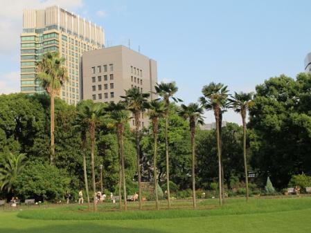 日比谷公園椰子の木