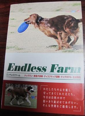 Endless Farmの森