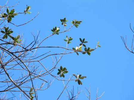 秋の空と木の葉