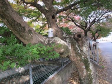 木の上のカンカラ