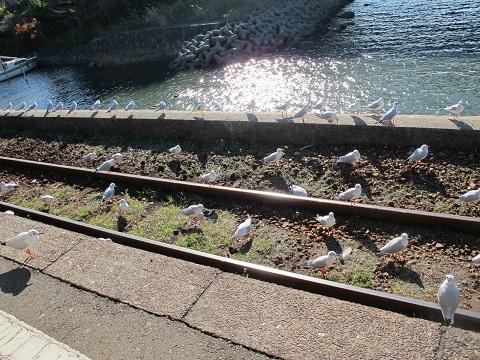天浜線 佐久米駅 ユリカモメ
