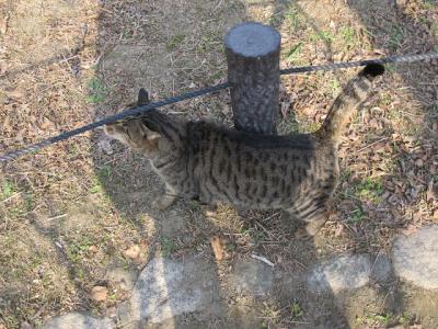 大阪城公園 猫