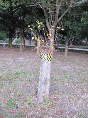 大阪城 ノースロップの森