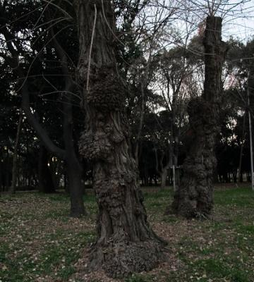 大阪城公園 山親父