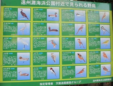海浜公園で見られる野鳥