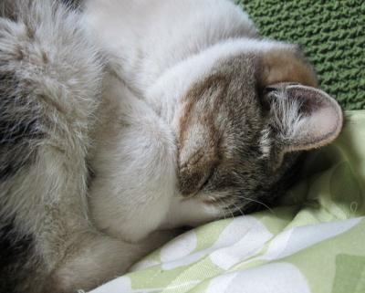マフ太郎のかくす寝