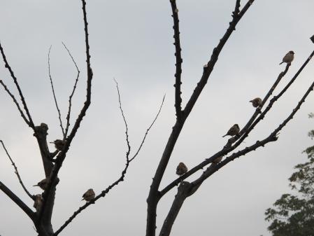 スズメの生る木
