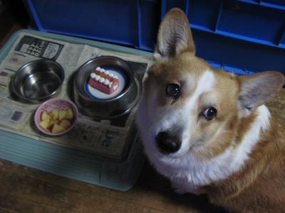 た・食べていいの??