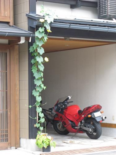 ヘチマとバイク