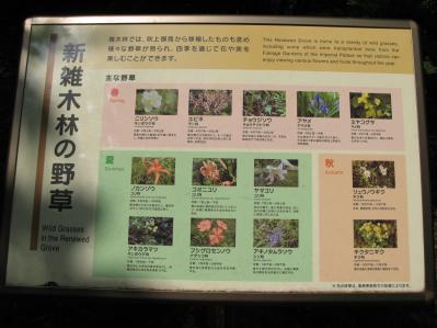 新雑木林の植物